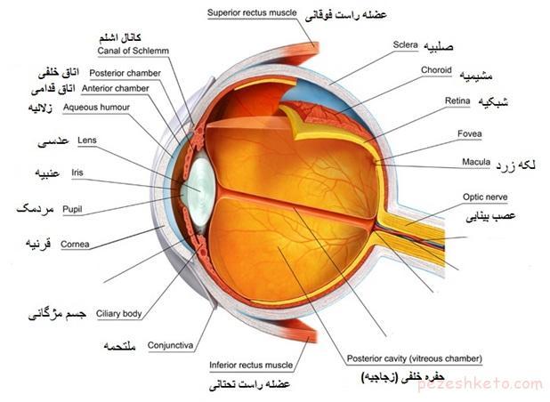 ساختمان چشم